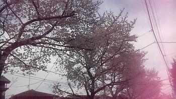 2012_04_07_13_54_17.jpg